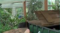 水培种植系统案例 水培种植(三)