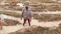 柬埔寨的小伙子河边撒网狂捕一网鱼