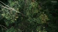 在原始人眼中,丛林中的一切都可以用来做武器