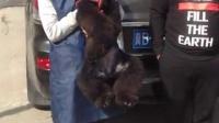 唐山客户亲自上门购买巨型泰迪幼犬