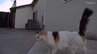 猫咪动感跟拍-红狐狸O2运动相机(测试)