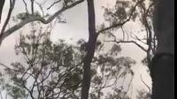 【安全防卫网】蟒蛇上树