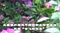会飞的花朵——记上海动物园第四届蝴蝶展