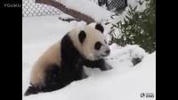 二顺的双胞胎雪地里尽情翻滚