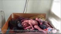 """印度男婴拥有四条腿 被称""""上帝的礼物"""""""