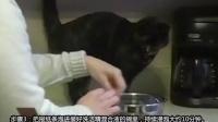 如何制作自己的猫砂_中英字幕_视频翻译_特兰斯科
