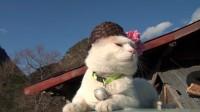 「猫叔」2011.06.10 花桃