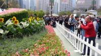 2013年香港花卉展……串花