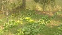 随手拍-菜鸟吃白菜全过程纪实录像