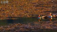《影动·泸沽湖》 A55会动的照片系列