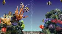 热带鱼02