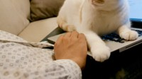 这是谁家的猫猫啊~萌翻了!!!1