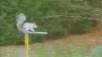 松鼠表演  太神了 !
