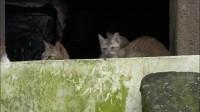 【岩合光昭】猫步走世界--台湾篇2