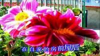 宝清县花卉 西番莲花  清阳山人