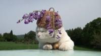 「猫叔」2011.06.10 藤 Wisteria