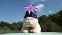 「猫叔」2011.06.14 クレマチス Clematis