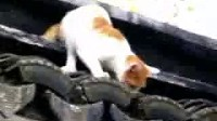 救助流浪猫