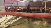 张北县牲畜市场-王成交易服务部