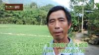 戴金国2848空心菜(藤菜)高产种植技术学员代山