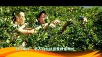 中国传统山茶油制作过程