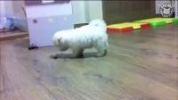 得瑟的小宠物们,动物搞笑视频集锦_标清