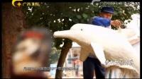 广西故事-钦州五彩海豚