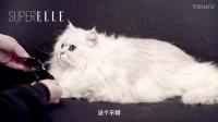 ELLE配饰间|一只叫LV的霸道总裁猫带我们选7款最适合娘Man的包包
