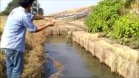 乡间稻田边的水渠里钓鱼