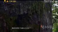 广西故事二十二-神秘的天坑群
