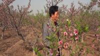 涿鹿县优秀歌手孙进喜演唱《桃花盛开的地方》