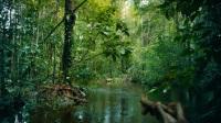 大卫·贝克汉姆,摩旅亚马逊丛林(超清1080P)
