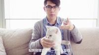猫咪+贴纸=怀疑猫生【喵呜记 第16集】