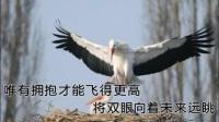 一首好听励志的歌 坚毅的鸟