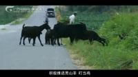 绿色广西六 隆安篇—那绿飘香兴隆安.flv