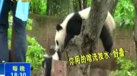 """女子和大熊猫合影""""自拍""""被一口咬住头发170427在线大搜索"""