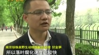"""江苏南京:老虎浴后变""""黑虎""""?动物园做出回应170427在线大搜索"""