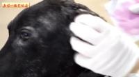 05-9期每日一狗之流浪狗救助:马里奥-救助一只受到虐待的狗狗