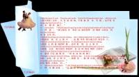 圣经【创世纪第9章】