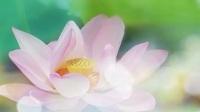 荷心.瑜伽放松休息术【30分钟版】