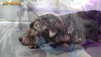 05-15期每日一狗之流浪狗救助:爱心救助受虐待的狗狗,转变惊人,狗狗只是需要爱