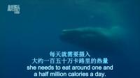 两百吨的巨兽, 名副其实的世界最大