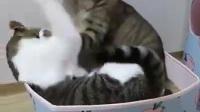 前一秒还很恩爱的猫咪, 下一秒就开撕了, 喵星人的世界真的无法理解
