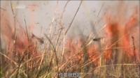 草原烧起大火, 蚂蚱虫子乱蹦, 小鸟们能吃到烧烤, 高兴极了