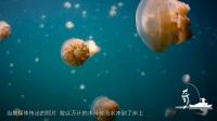 英国海岸出现罕见异象 数万巨型水母被冲上岸