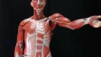 [解剖學影片]王霈老師講解軀幹前側肌肉