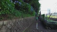 【岛国物语】日本东京飞鸟山公园紫阳花
