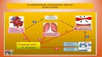 第128讲:常见血管活性药物和正性肌力药物在心血管麻醉中的应用(周少凤)