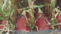 Dragotec卓收 德国玉米割台