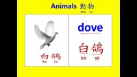 abc英語 動物中英文名稱7 (Learning English and Chinese about animals.)